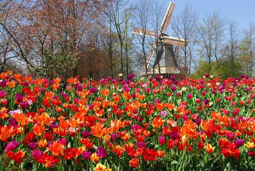 Keukenhof Park Gardens Keukenhof Amsterdam