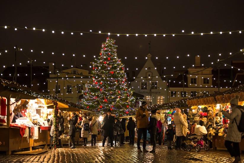 Where To Buy A Living Christmas Tree