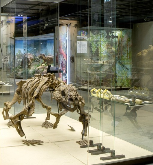 Darwin Museum Sightseeing Moscow