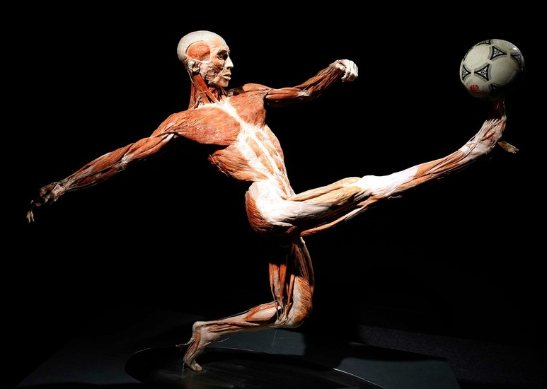 Gunther Von Hagens Body Worlds The Original Exhibition Of Real