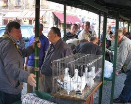 Pigeon Market
