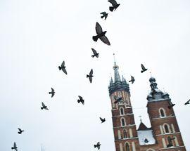 'Pride & Pestilence' - The Pigeons of Kraków