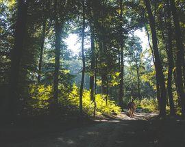 Las Wolski: Kraków's Forest Sanctuary