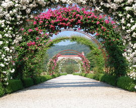 University of Maribor Botanic Garden