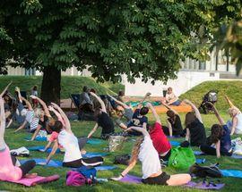 Yoga on Leśmian Meadow
