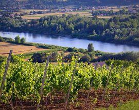 Janowice Winery