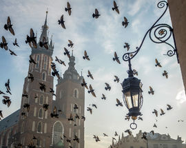 The Legend of the Pigeons of Kraków