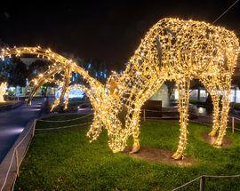 Joburg Zoo Festival of Lights