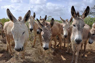 Donkey Sanctuary | Bonaire Sightseeing