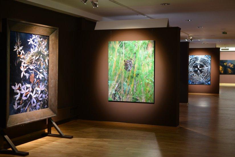 музей классической фотографии в москве дерево