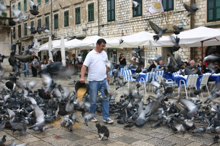 Pigeon feeding at the Market Square
