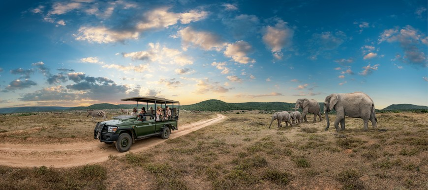 Incredible wildlife experiences on a game drive at Shamwari nature reserve