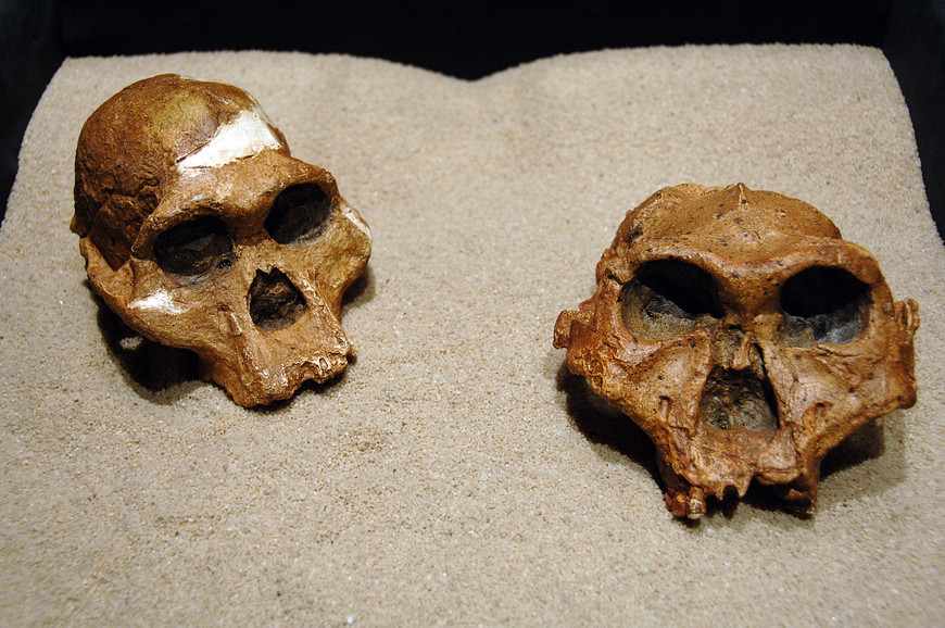 Hominid fossils at Origins Centre in Johannesburg