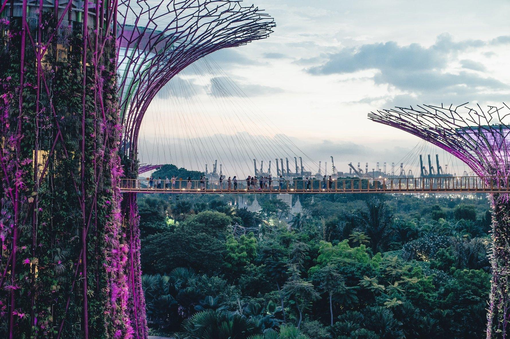 24 Hours in Singapore - Supertrees © annie-spratt
