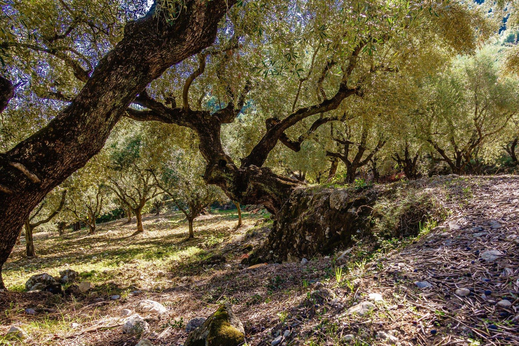 Hidden Secrets of Prevaza Greece © andreas-weilguny-unsplash
