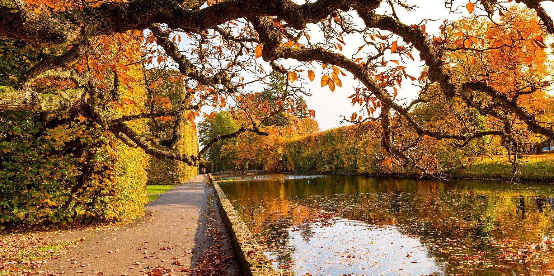 Oliwa Park in Autumn, Gdańsk